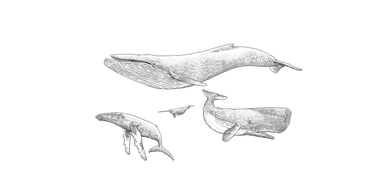 75be9c36f86d1d Wielorakie wieloryby - Kwartalnik Przekrój