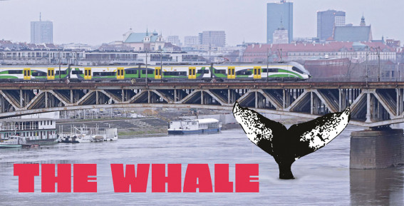 A whale in Warsaw? Impossible! And yet here it is!