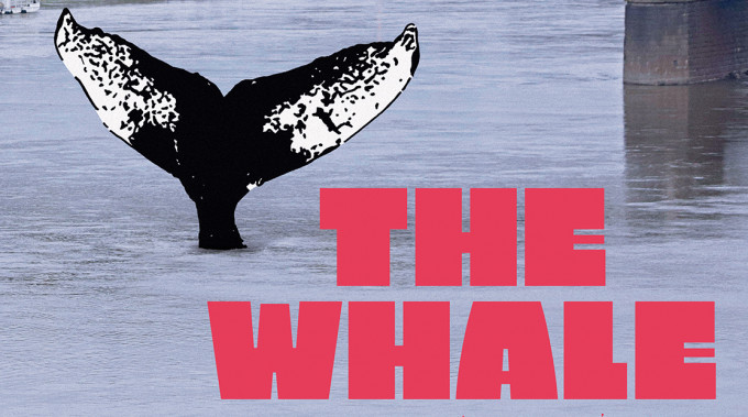 """The Whale"" wins Jury Award at the Sebastopol Film Festival"